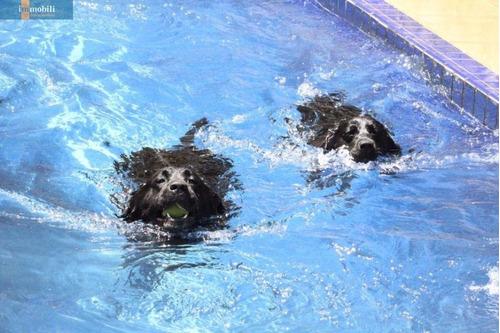 Imagem 1 de 15 de Maravilhosa Chácara Pronto Para Hotel De Cães.  - Gv20753