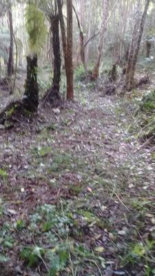 Terreno Em Miracatu-sp, Plano, Com Água.