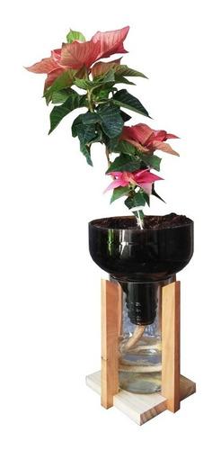 Imagen 1 de 5 de Planta De Interior Flor Del Inca Little Plant 27 Con Soporte