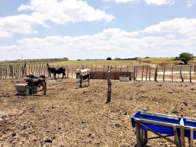 Fazenda Em Ielmo Marinho, 87 Hectares, Com Excelentes Estruturas - Fa00002 - 4218007