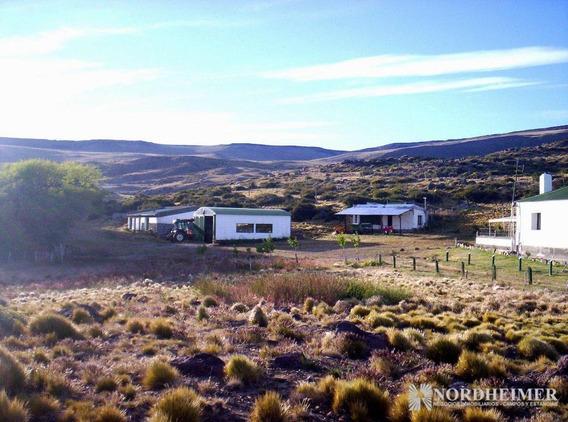 30.000 Ha El Calafate, Santa Cruz, Patagonia - Entre Lago Argentino Y Lago Viedma, Costa Rio La Leona - Estancia Patagonica