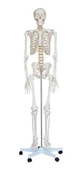 Anatomia Humana Esqueleto 1.70m Haste Suporte Rodas