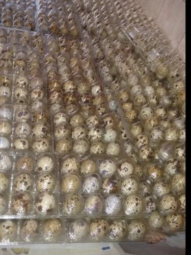 Imagen 1 de 5 de Huevos Fertiles Codorniz ×15docenas