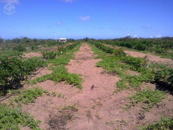 Vende-se Terreno Com 2 Hectares