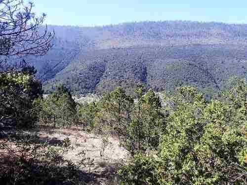 En Venta 20 Hectáreas De Terreno Campestre En La Sierra De Arteaga, Coahuila