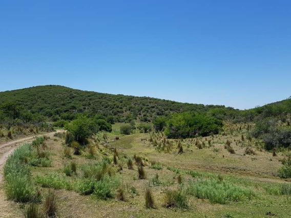 Campo Ganadero Tulumba