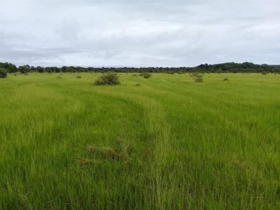 Fazenda Com 845 Ha À Venda Em Dueré Tocantins - Rc16