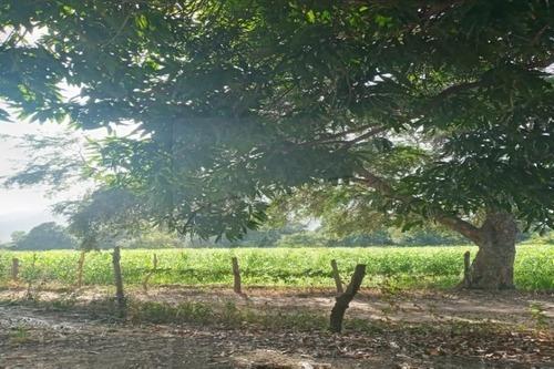 Terrenos En Venta En El Naranjo, Manzanillo