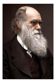 Quadro Decorativo Charles Darwin Arte 42x29cm