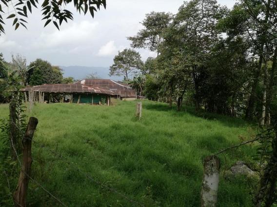 Finca Cafetera Y Ganadera, Zona Tranquila. Areas Verdes O2