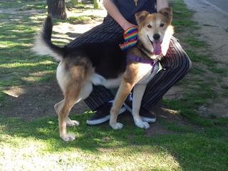 Perro Cachorro Rescatado En Adopcion. Leer Bien Todo.