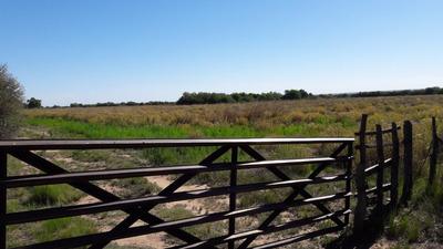 Campo De 318 Has En Concarán (san Luis)