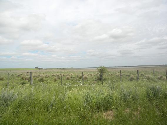 194 Has. Próx. Rolón - La Pampa