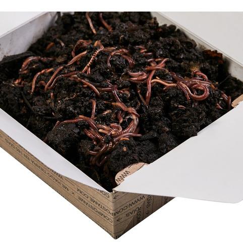 Lombrices Rojas Californianas Para Compost Red De Compostaje
