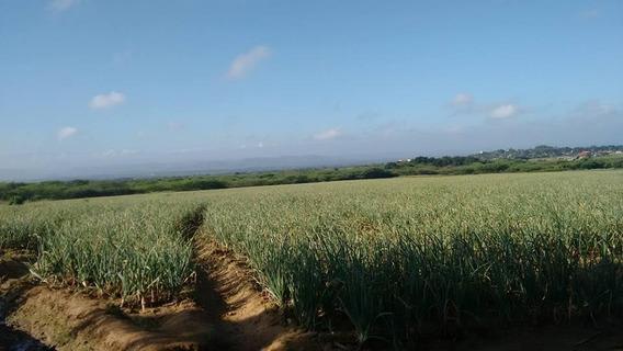 Finca Agrícola En Valverde De 1470 Tareas Con Piña