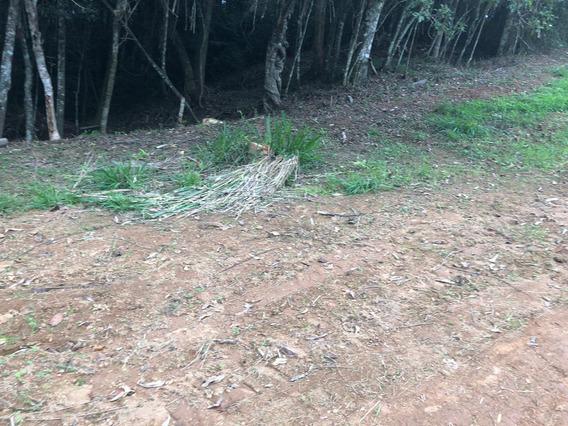 Rd Vendo Um Terreno Posmo A Rodrovia Raposo Travaire