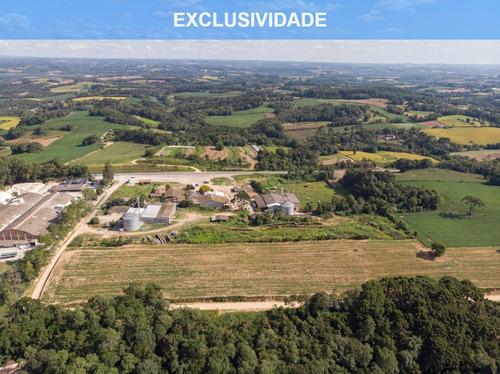 Imagem 1 de 17 de Terreno/ Área 20.000m² A Venda Em Araucária Pr. - Te00002 - 68828711