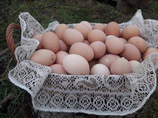 Huevos Caseros Agroecologicos