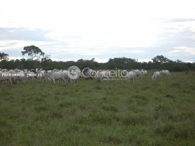 Fazenda Para Venda Em São Félix Do Araguaia, Fazenda. 83.848,848. Mil Hectares -são Felix Do Araguaia - Mt - 31613