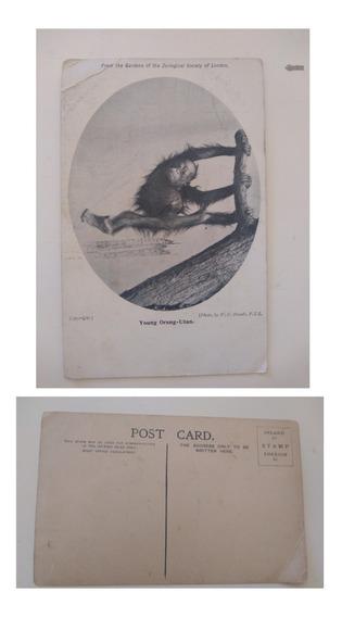 Postales Antiguas- 1905 -inglaterra
