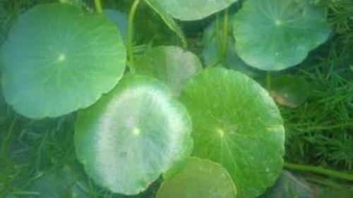 (03) Plantas De Lochita