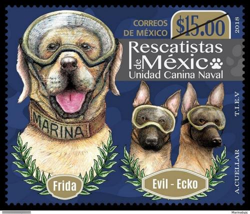 Imagen 1 de 1 de México 2018 : Rescatistas , Frida Unidad Canina Naval Perros