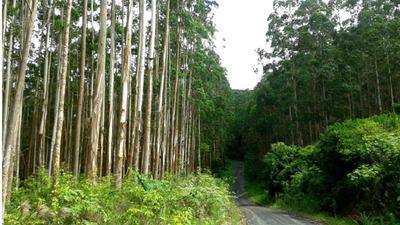 Floresta Eucalipto (estudo Imóvel Como Parte + Volta Em R$)