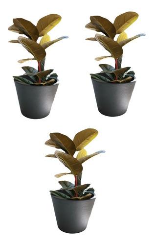 3 Piezas De Maceta Decorativa De Plástico Petunia Colores