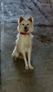 Perro En Adopción Guardián