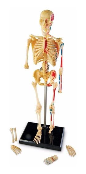 Esqueleto Humano Modelo Anatomico 41 Piezas Envio Gratis