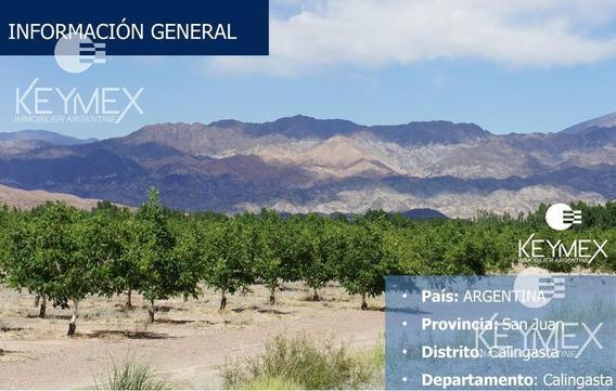Campo - Calingasta - San Juan - Nogales