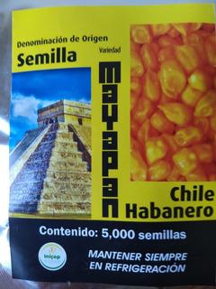Semilla D Chile Habanero Mayapan Certificada 1 Gramo 220 S.