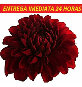 Bulbo De Flores Pedido Cliente Exclusive