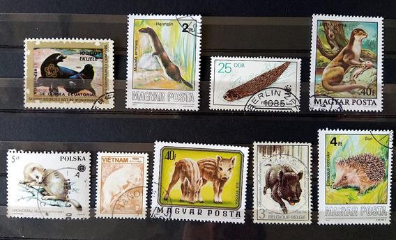 Fa 012 Selo Fauna Foca Mustela Porco