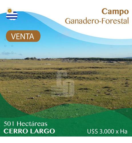 Campo Ganadero-forestal De 501 Ha En Cerro Largo