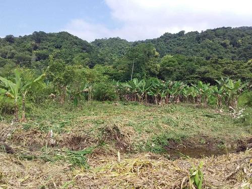 Imagem 1 de 6 de Terreno Área De Chácara Em Mongaguá. Ref. 468