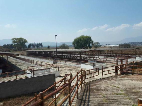 Rancho - Para Ganadería En Temascalcingo