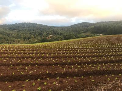 600 M2 15x40 Com Area Verde E Linda Vista Por 25 Mil J