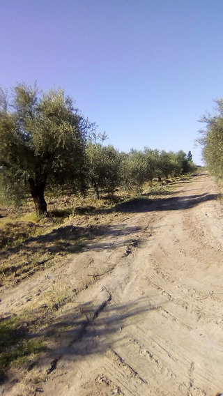Finca De Olivos 30 Hectareas