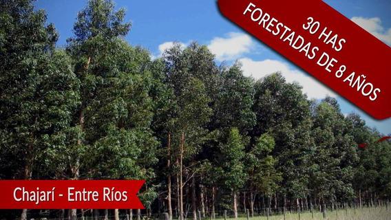 Venta Forestación Chajarí Entre Ríos