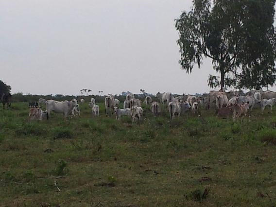 Vendo Fazenda Estruturada Para Pecuaria Em Bataypora-ms