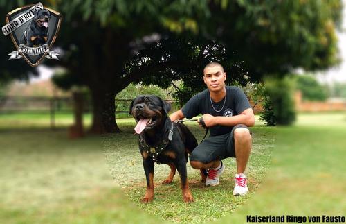 Filhotes De Rottweiler - Linhagem De Campeões (fêmeas)