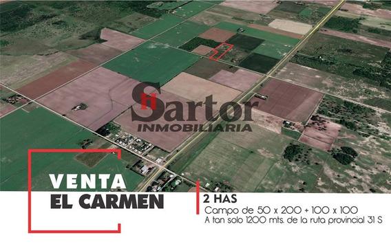 Campo 2 Has El Carmen