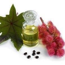 Extracto De Ricino Aceite Natural - 1 Kilo