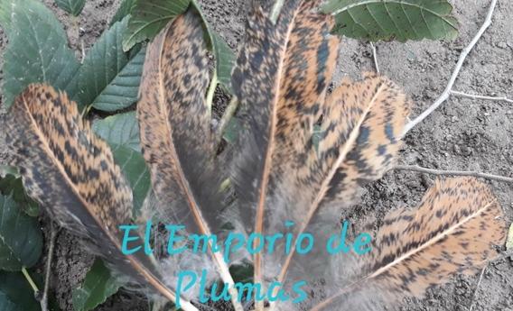 Plumas Naturales Jaspeadas Con Negro Tornasolado X100 Plumas