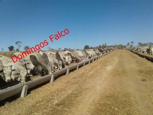 Venda - Fazenda - Zona Rural - Várzea Da Palma - Mg - D0482