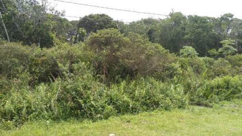 Imagem 1 de 5 de Terreno No Bairro Santa Cruz, Em Itanhaém -6449-jc
