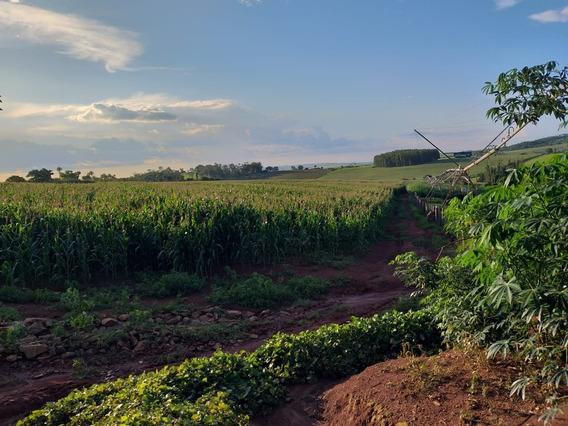 Sítio Com Pivô Central Na Região De Itobi Sp, 04 Casas, Rio No Fundo , Ótima Topografia , 10 Hectares Irrigado, Galpão. - 422