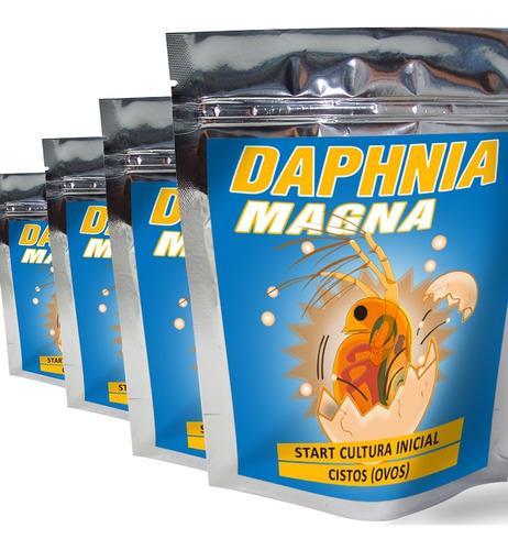 Start Daphnia Magna Cultura Inicial Cistos Ovos