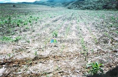 Excelente Fazenda - 421 Ha - Região Luminárias (mg) - Codigo: Fa0020 - Fa0020